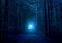 Dark-Blue-Forest-210x145