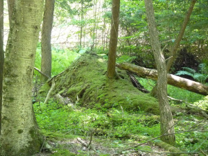 Fairy Knoll in the forest