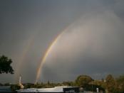 Double Rainbow Linden.